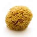 Natural Mediterranean Sea Sponge, 17 cm